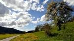 Cveto travnik