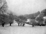 vrbe-v-snegu
