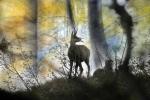 V gozdu Gams - Oton Naglost 3